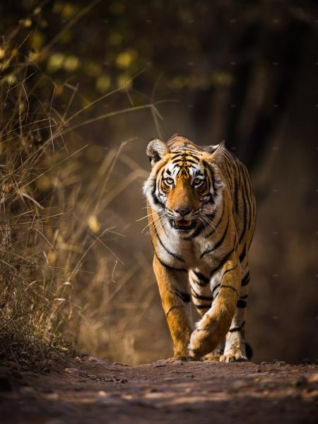 Golden Triangle Tour With Ranthambhore National Park Safari Tour