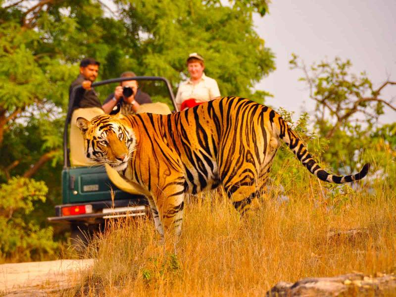 Wildlife Of Rajasthan Tour