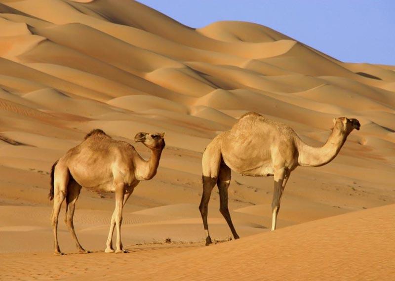 Mountain To Desert Tour