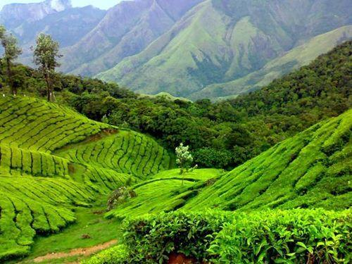 Coimbatore With Ooty Tour