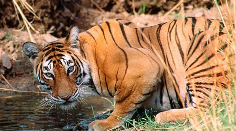 Ranthambhore National Park 2N/3D Package