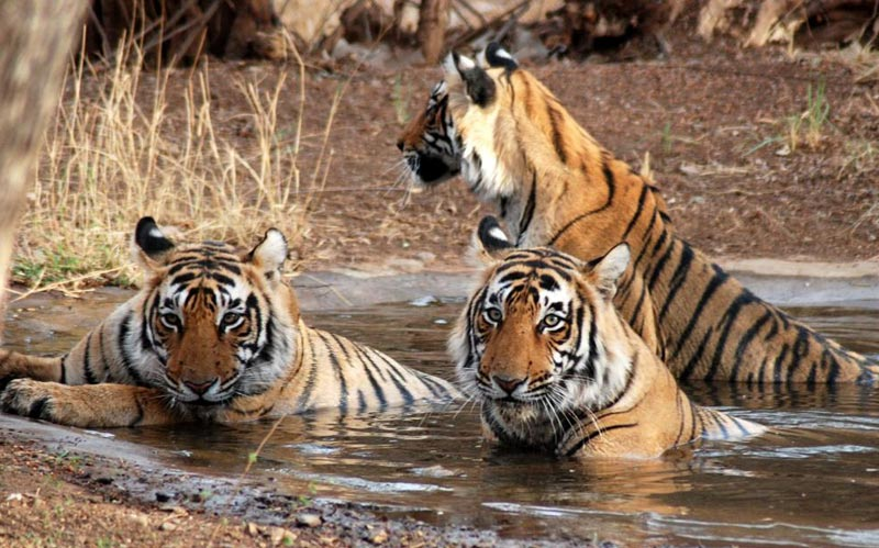 Ranthambhore National Park 2N/3D Tour