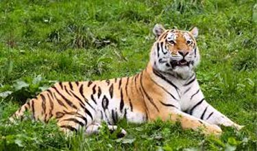 Periyar Wildlife Sanctuary 4N/5D Tour