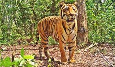 Bandhavgarh National Park 2N/3D Package