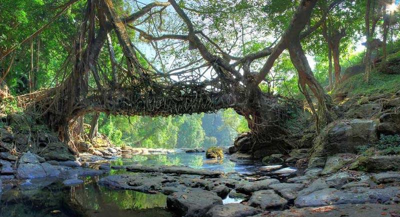 Abode Of Clouds Meghalaya Tour