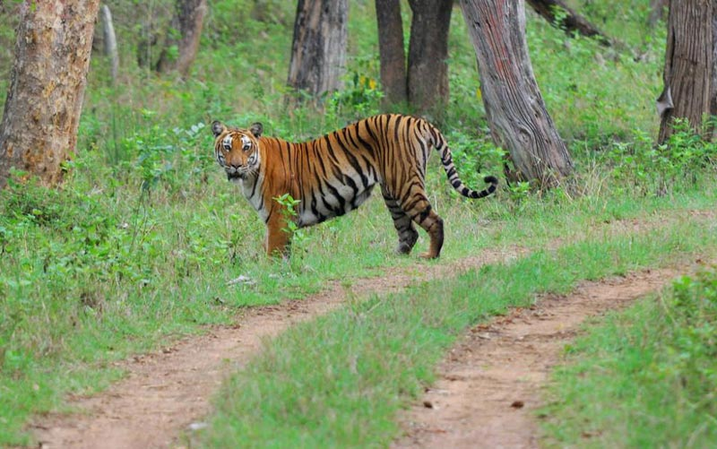 Mysore - Bandipur - Ooty Tour Package 3 Nights 4 Days