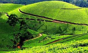 Mysore Ooty Coonoor Trip 2N/3D Tour