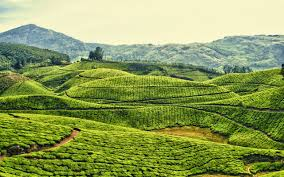 Mysore Ooty Kodaikanal Tour Package