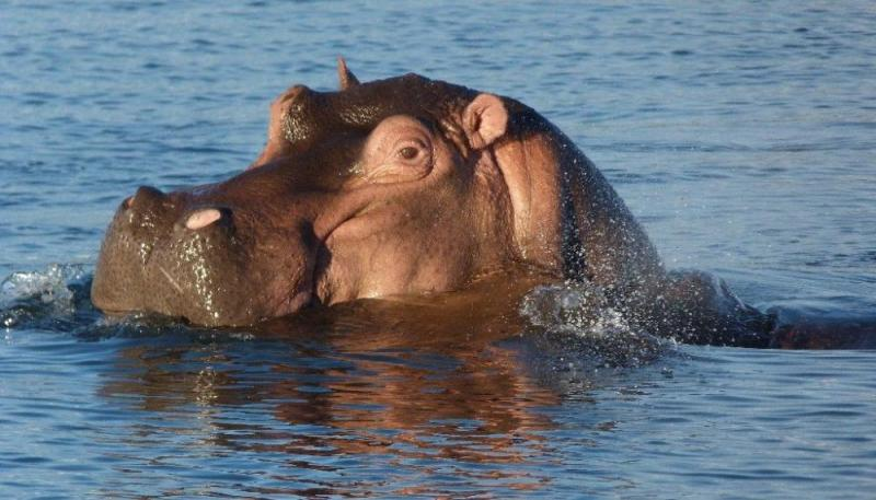 4 Days Kafue National Park Zambia Safari Tour