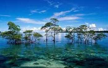 Budget Package - Andaman Port Blair 3N/4D Tour