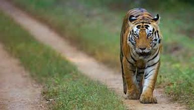 Kanha - Raipur Tour Package