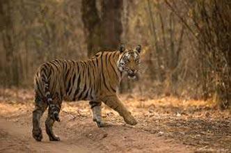 India Tiger & Tribal Tour