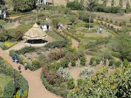 7 DAYS BLISSFUL MADHYA PRADESH TOUR