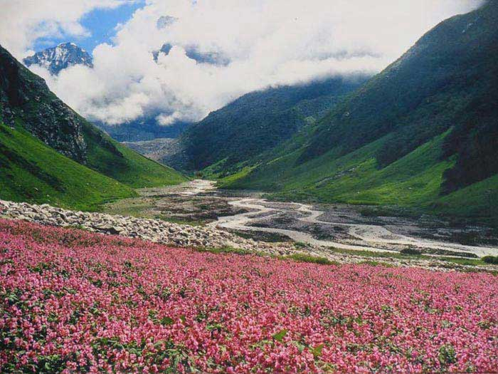 Valley Of Flowers Trekking Trip Tour