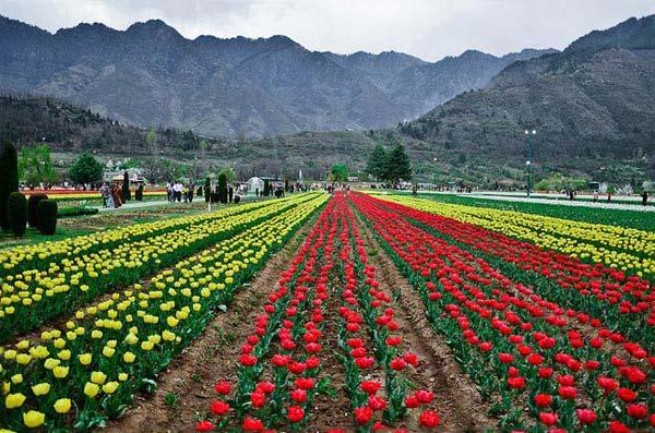 Beautiful Kashmir Trip 8N/9D Package