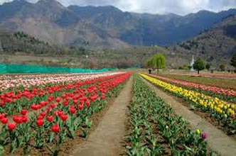 Srinagar Tour With Pahalgam