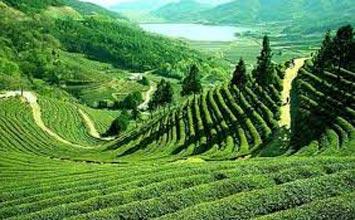 Darjeeling Lachung Yumthang Tour