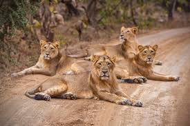 Gir National Park Weekend Tour