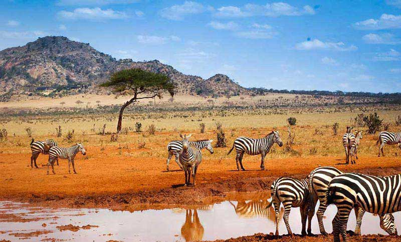 Wildlife Tour Of Kenya Package