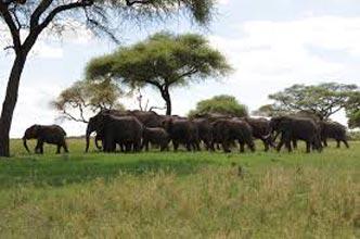 Kenya And Tanzania Maasai Mara,Lake Nakuru,Amboseli,Arusha,Lake Manyara Tour