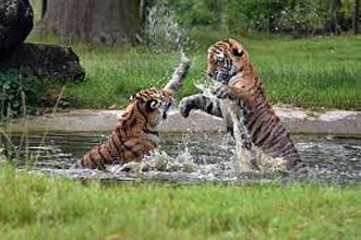 Sundarban Vivada Cruise Package
