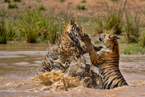 India Wildlife Travel Package