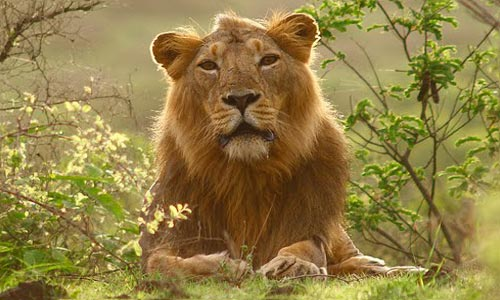 Lions And Tribes Of Gujarat Tour