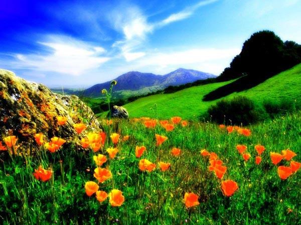 Valley Of Flowers Trekking Package