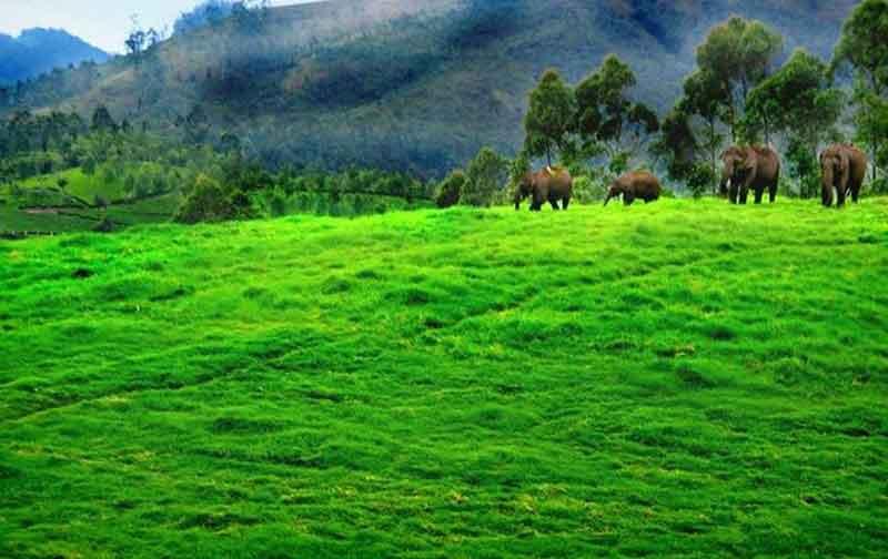 Coimbatore - Ooty - Kodaikanal - Munnar - Cochin Tour