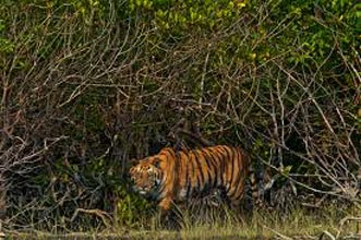 Sundarbans Sightseeing Highlights Tour