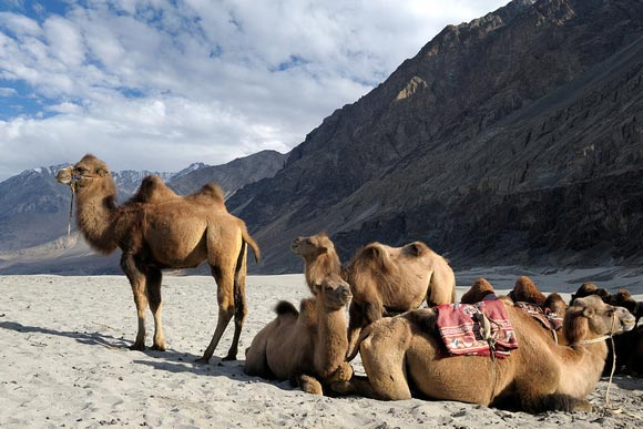 The Breathtaking Ladakh Package