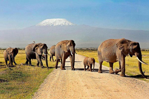 Amboseli 1 One Day Tour Trip From Nairobi