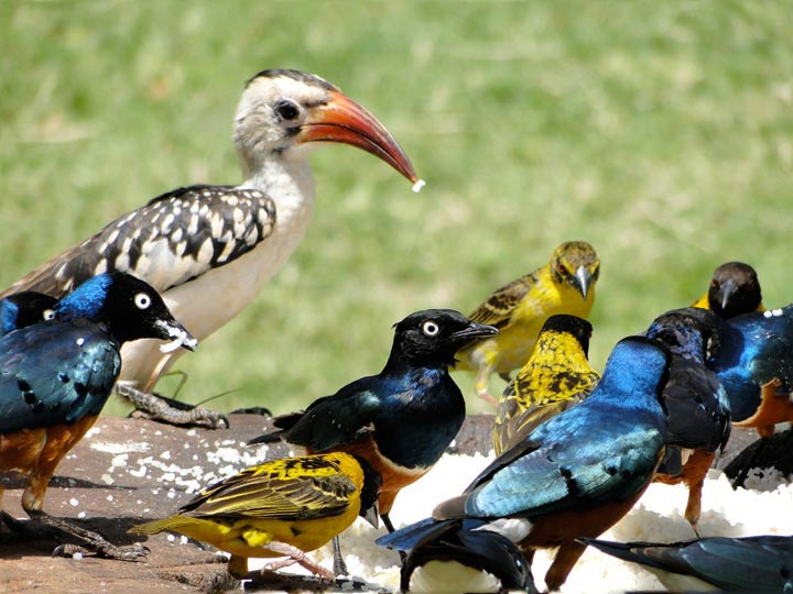 Nairobi - Birdwatching Day Trip Package