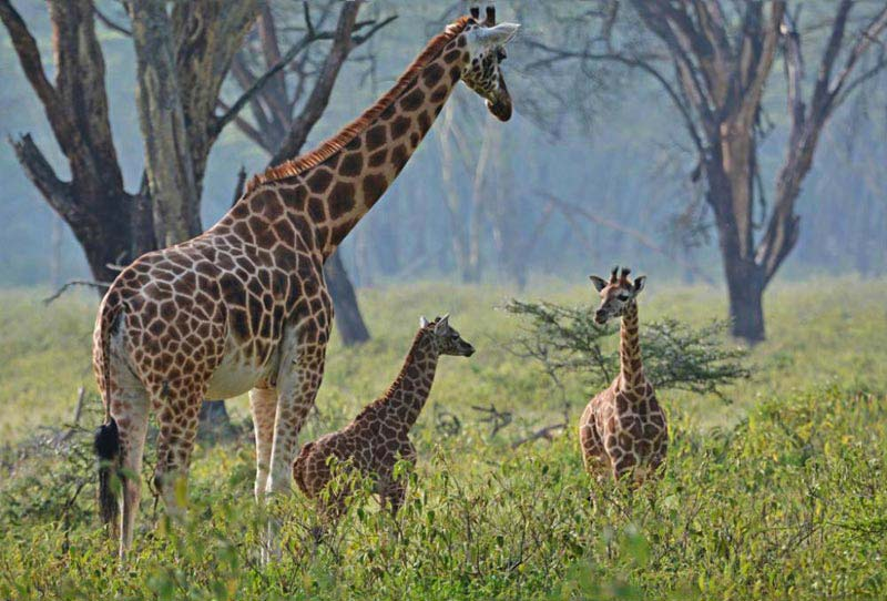Nairobi-Lake Nakuru National Park Tour