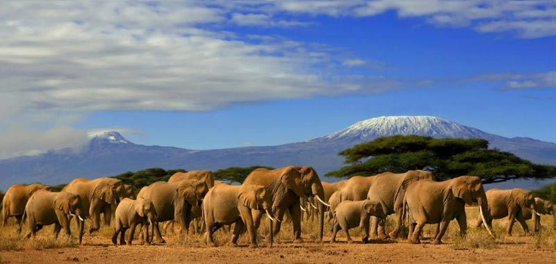 Amboseli Day Trip Package