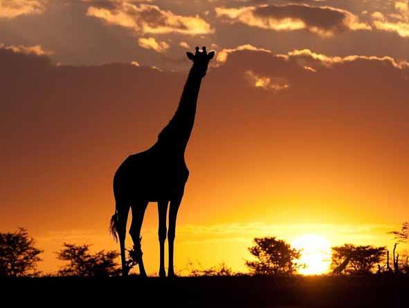 Masai Mara Game Reserve Overnight Safari Tour