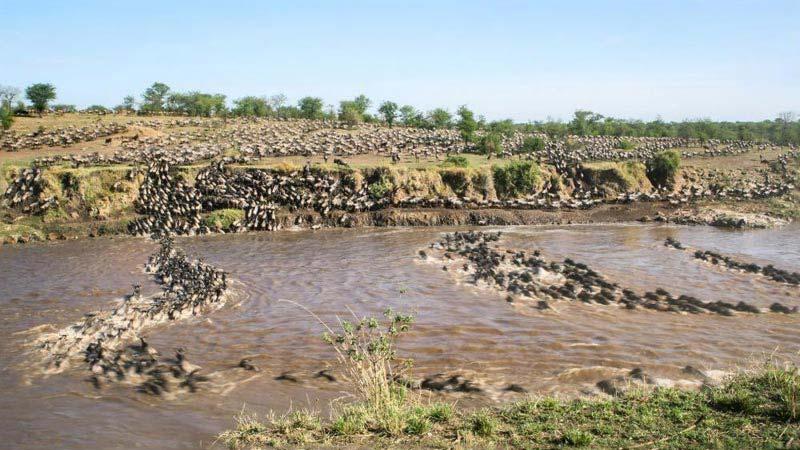 Masai Mara 3 Days Budget Camping Tour