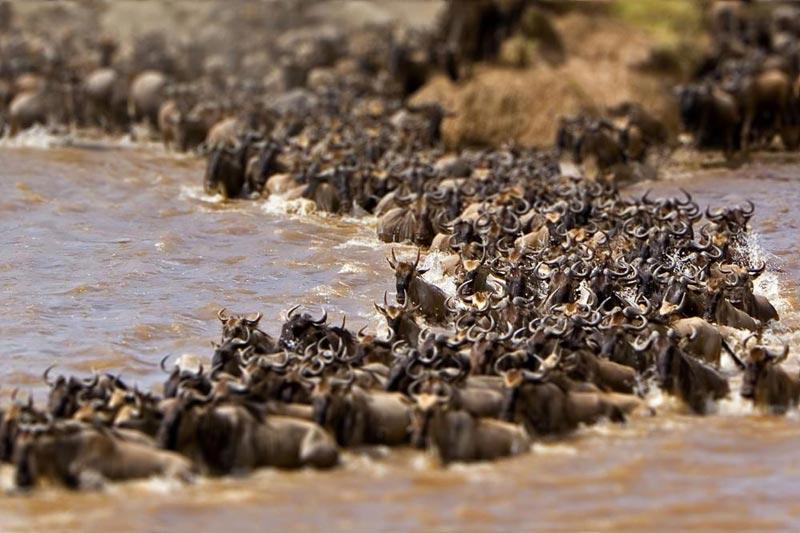 Wildebeest Migration Shared Tour