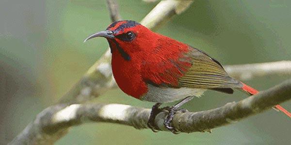 Kinabalu Park Bird Watching & Rafflesia Exploration Day Trip Package