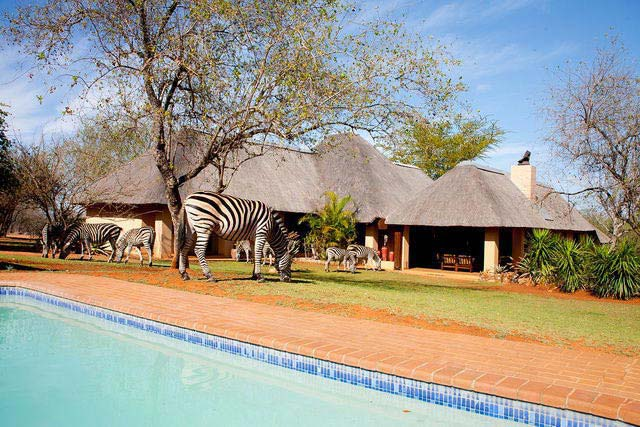 Experience The Magnificent Kruger National Park At Royal Kruger Lodge Tour