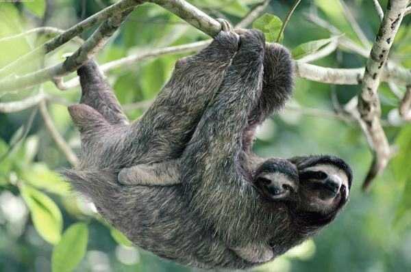 Wildlife & Culture Costa Rica - Nicaragua Tour