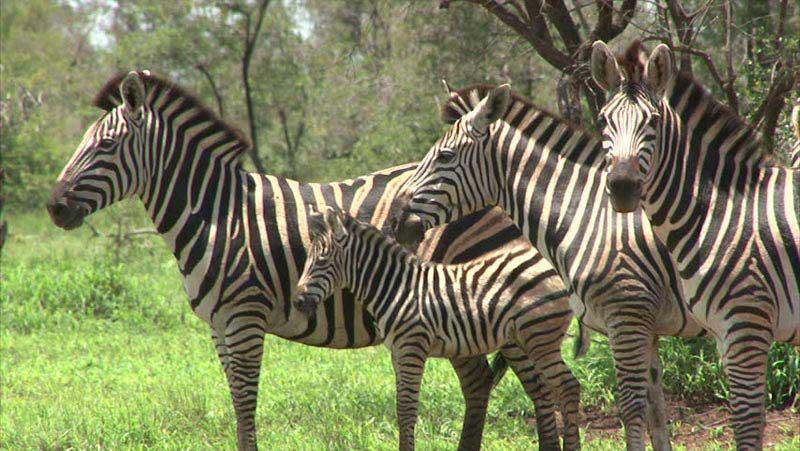 Kruger Walking Safari - Cape Town Tour