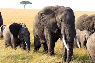 Honeymoon: Luxury Kenya Safari - Zanzibar Tour