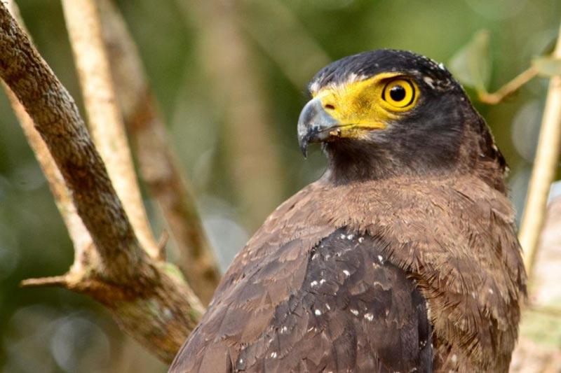 Birding & Culture In Sri Lanka Tour