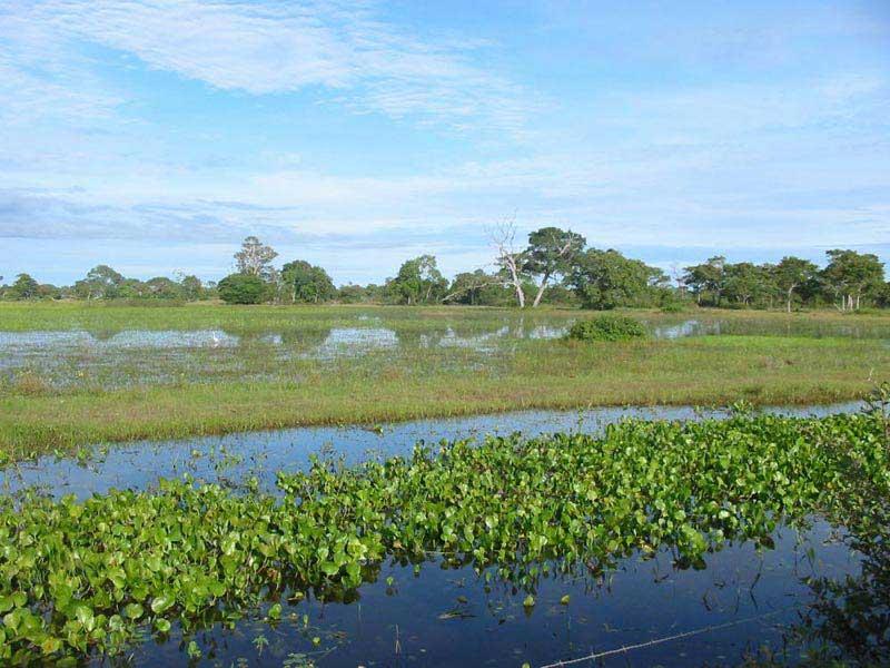 Iguassu - Pantanal Wetlands - Rio De Janeiro Tour