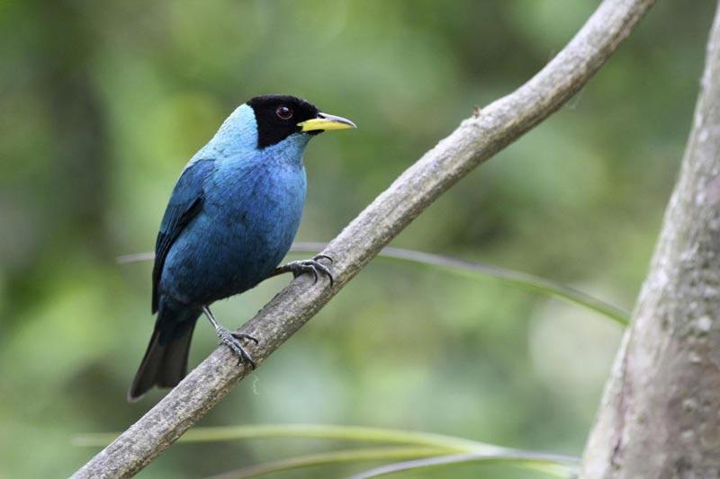Colombia Birding & Wildlife - Panama Canal Tour