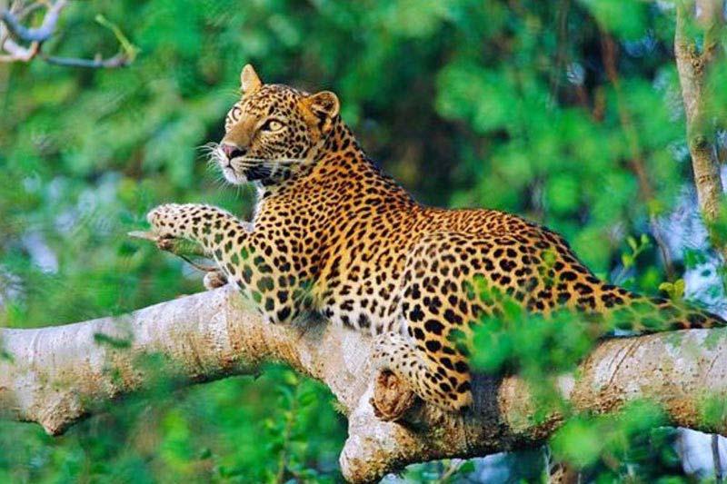 Sri Lanka Wildlife & Culture - Pasikuda Beach Tour
