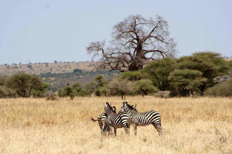 Tarangire - Ngorongoro - Serengeti Safari Tour