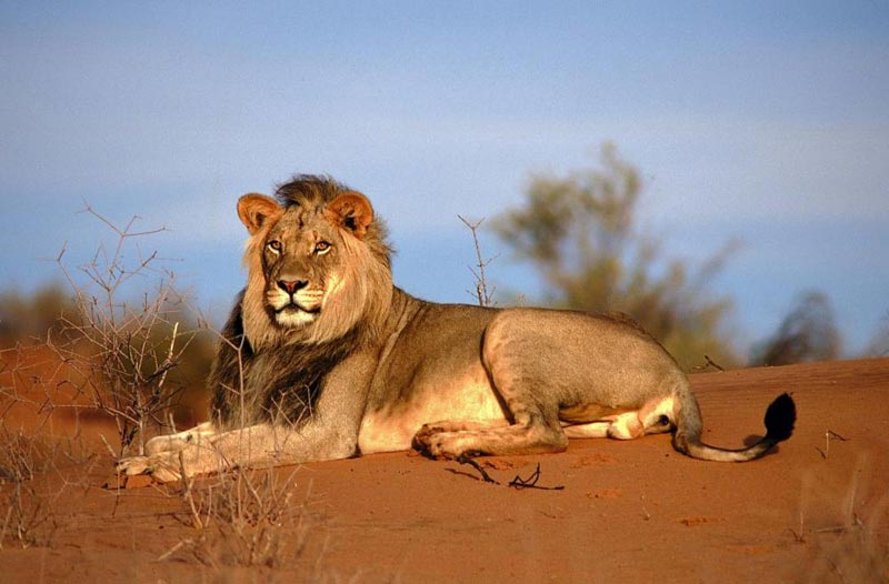 Exploring The Kalahari & Namibia - Privately Guided Tour