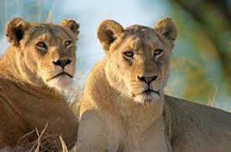 Kruger National Park - Cape Town - Winelands Tour